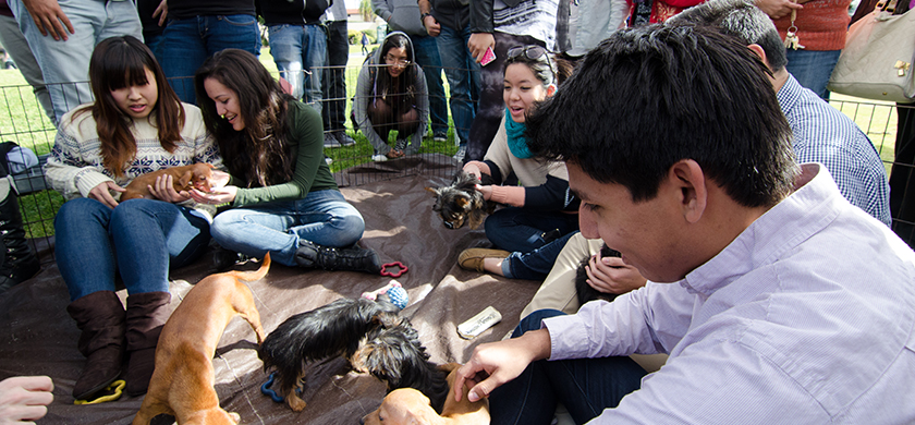 Students playing with puppies in a cage