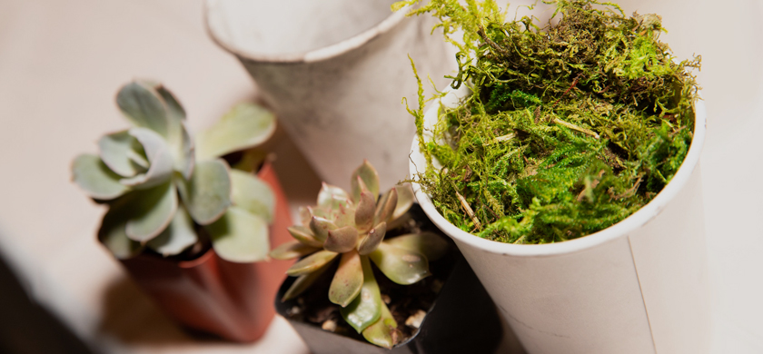 Potted plants and cups of moss