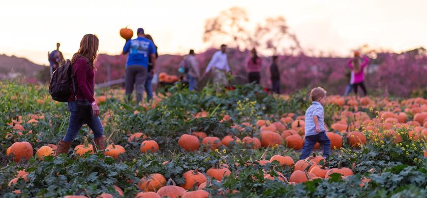 Participants walking around a pumpkin patch